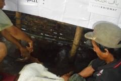 aqiqah mojokerto, aqiqoh surabaya, aqiqoh gresik, aqiqoh sidoarjo, hewan qurban surabaya, hewan qurban gresik