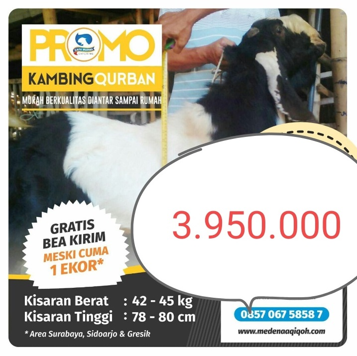 Kambing Qurban 3.950.000