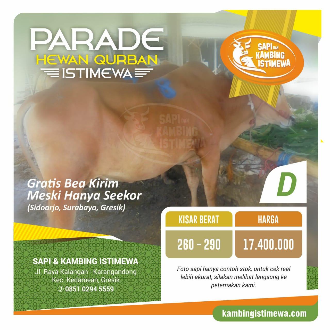 Sapi Qurban D Rp. 17,4 juta