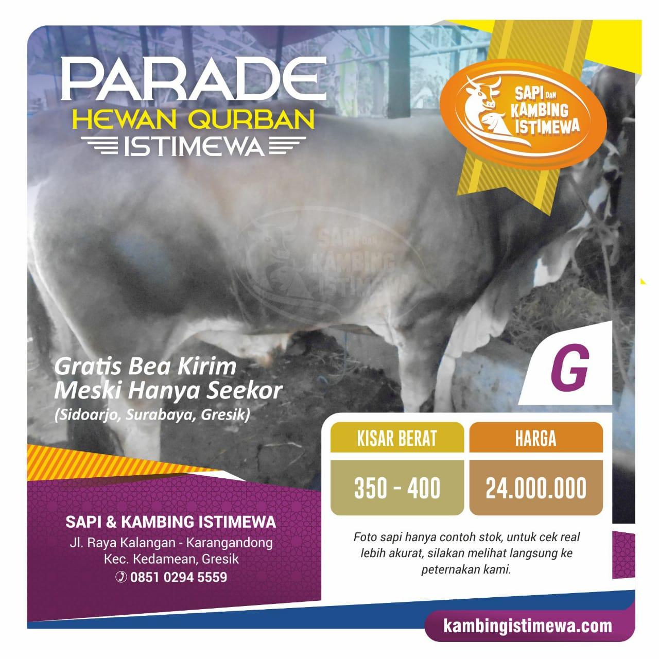 Sapi Qurban G Rp. 24 juta