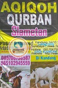 aqiqah surabaya 1 196x300 Jual Sapi Qurban di Surabaya