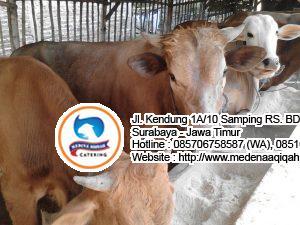 aqiqoh surabaya 1 300x225 Jual Sapi Qurban di Surabaya