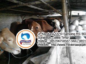 jasa aqiqah surabaya 300x225 Jual Sapi Qurban di Surabaya