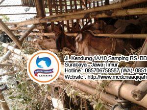 jual kambing di surabaya 300x225 Jasa Aqiqah Surabaya