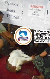 jual kambing qurban di surabaya 192x300 Jasa Aqiqah Surabaya