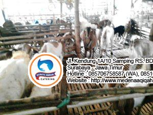 jual kambing qurban surabaya 300x225 Jasa Aqiqah Surabaya