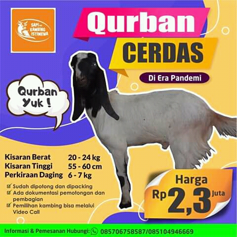 Kambing Qurban 2,3 juta